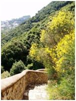 Capri – Die seit dem Altertum beliebte und berühmte Insel